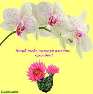 Надя Кактус: Чтоб тебе кактус вместо орхидеи!
